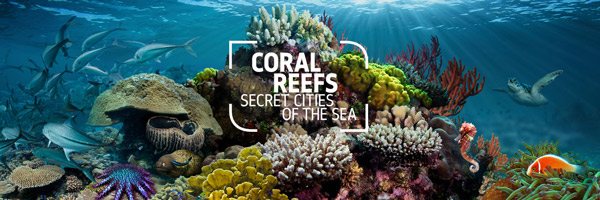 coral_main_banner-600-200t