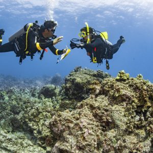 dive theory eLearning